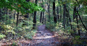 Forest Tourism – A Green Path Toward Sustainable Forestry